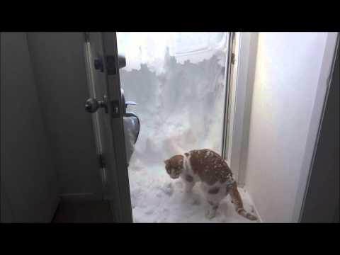 Kitty Hated Being Stuck In The Snow!