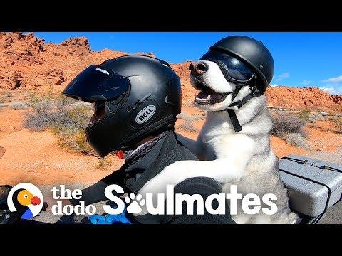 Guy And His Dog Are Visiting All 50 States On A Motorcycle