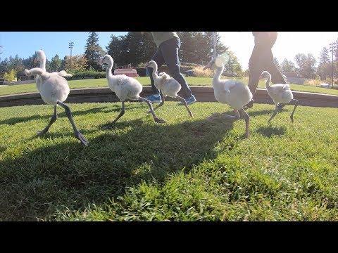 Go Baby Flamingos, Go!
