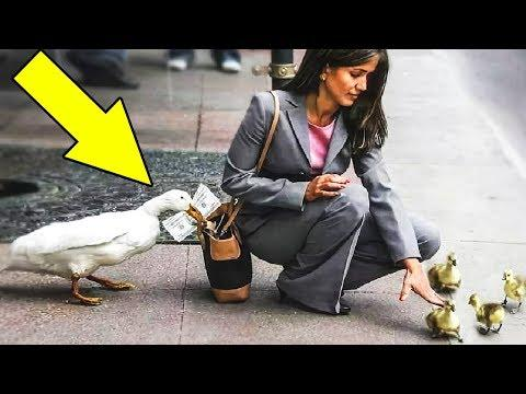 10 Animals That Were Caught Stealing
