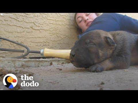 Mama Dog Shows Rescuers Where Her Babies Are Hiding #Video