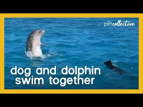 Dog and Dolphin Swim Together Video
