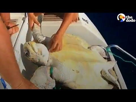 Boaters Drop Everything To Save Turtle Trapped In Net | The Dodo