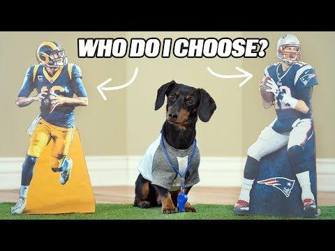 Crusoe Picks SuperBowl Winner (Loser?!) - Dog Predicts SuperBowl
