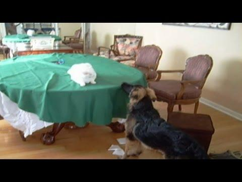 Music Montage: Cats And Dogs