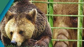 Bear is Rescued from Harrowing Captivity | Earth Unplugged