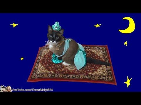 Cat Riding Magic Flying Carpet. #HappyHalloween