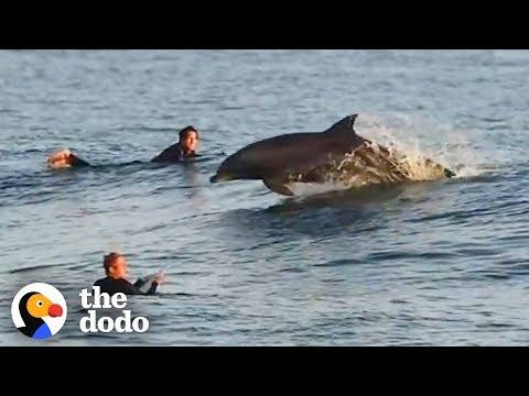 The Most Magical Dolphin Encounters | The Dodo