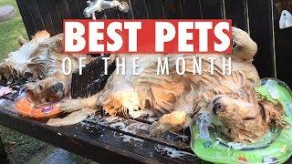 Best Pets of the Month July 2018