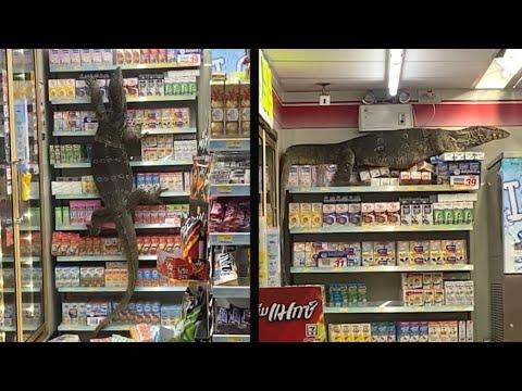 Giant Lizard Takes Over Store - Your Daily Dose Of Internet. #Video