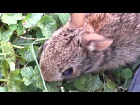How to call a baby rabbit to you. Video.