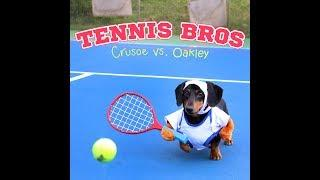 Super Smash Dachshund Tennis! Crusoe vs Oakley!