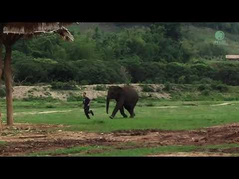 Jogging With Elephant