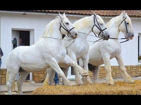 Cute And funny horse Videos Compilation cute moment of the horses