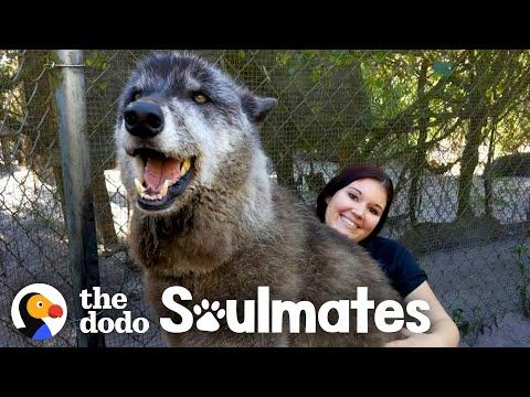 Wolf Dog Who Growls At Everyone Else Snuggles With His Best Friend | The Dodo Soulmates