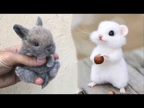 Cute baby animals Videos Compilation cute moment of the animals - Cutest Animals #8 #Video