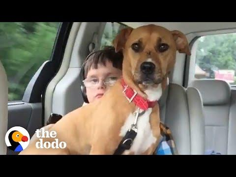 Rescue Pittie Helps Her Brother Start Talking #Video
