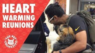 Try Not To Cry | Dogs Reuniting With Their Owners