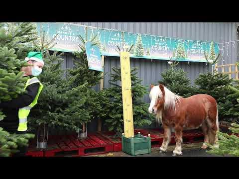 Albert is choosing the Christmas Tree! Emma Massingale Video