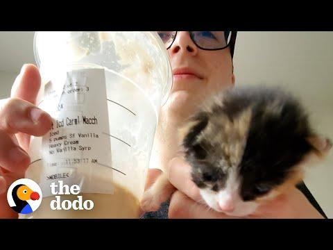 Couple Finds A Tiny Calico Kitten Outside of Starbucks Video