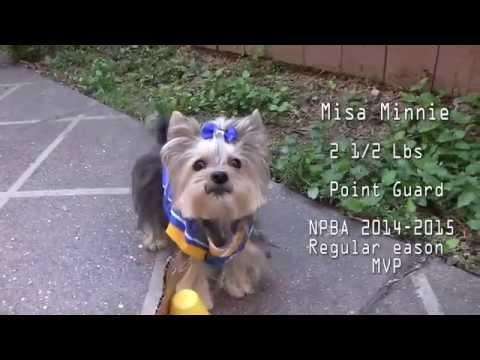 Adorable Puppy Basketball -The NPBA Finals - Misa Minnie Vs Brody Brixton