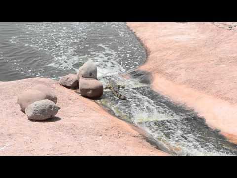 Crocodile Rides Rock Slip N Slide