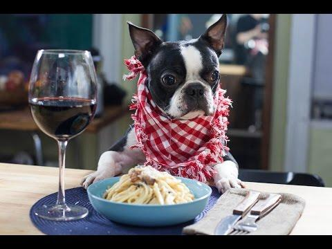 How To Make Spaghetti Carbonara - By The Dog!