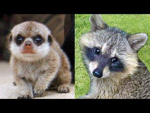 Cute Baby Animals - Baby Raccoon Rescue - Cute Animal Babies - Funny Babies Animal Video