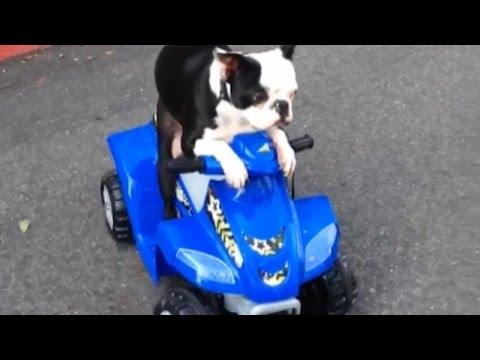 Animals And Power Wheels Compilation