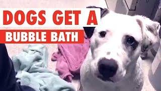 Dogs Take A Bubble Bath