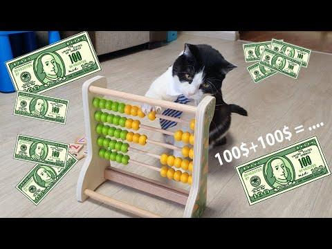 The Cat of Wall Street #Video