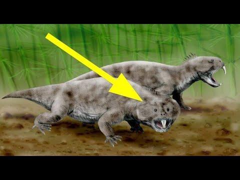 BIZARRE Prehistoric Creatures Video