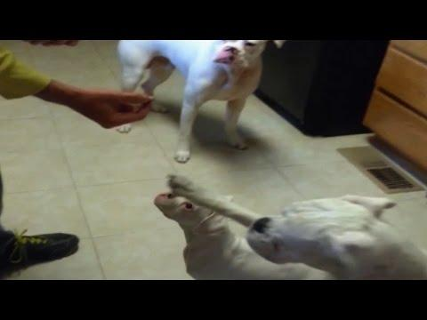 Big Dog Uses Paw To Push Little Dog Out Of Way For Treat