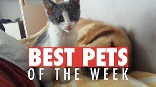Best Pets of the Week Video Compilation| April 2018 Week 2