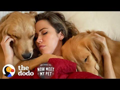 Bachelor Couple Keeps Adopting Golden Retrievers From Korea Video.