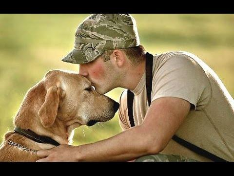 Top 10 Dogs Welcoming Soldiers Home Compilation