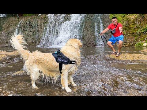 Golden Retriever First Time at the Waterfall Video