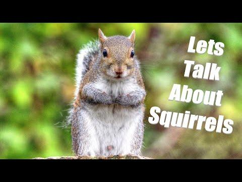 Squirrel Exercises and Trains Like an Elite Athlete – Squirrel Appreciation Day!