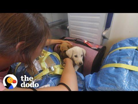 2 Puppies Found On Side Of Road Reunite Months Later Video