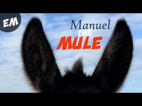 Meet Manuel the Mule from Spain! Emma Massingale Video
