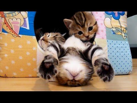 Kittens Falling Asleep Compilation | Funny Cats
