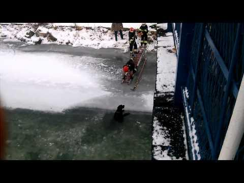 Dog Is Rescued Out Of Frozen River In Poland