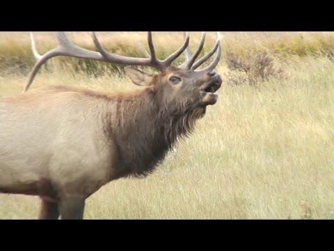 Listen: These Elk Sound Terrifying, Like Ringwraiths