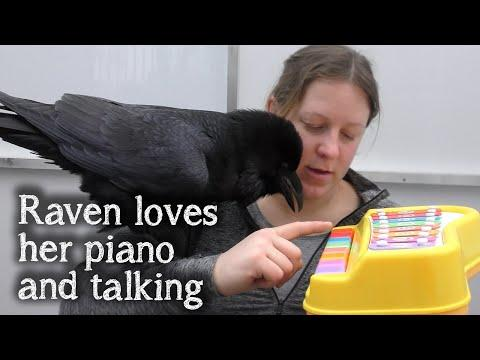 Fable the Raven | Hang out with Fable and her piano #Video