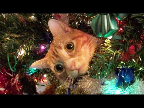 Funny Cats vs Christmas Trees Video - Meowy Catmess!