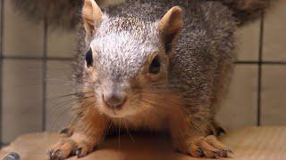 These Baby Squirrels Survived A Hail Storm | Dr. Jeff: Rocky Mountain Vet