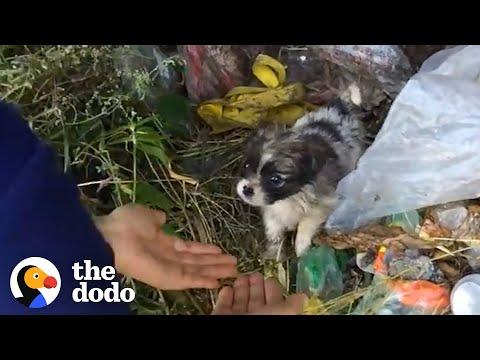 Tiny Puppy Found In Trash Looks So Happy In His Forever Home #Video