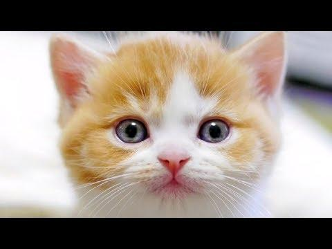 Meowing Cat Videos – Meow Cat Video – Kitten & Cat Meowing Happy – Cats Meow Kittens Meowing Sound