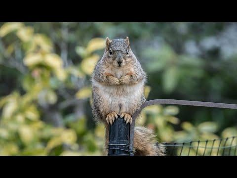 The Squirrel, the Physicist and the Bird Feeder Video