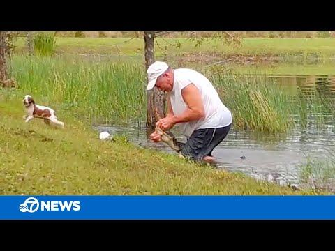 Florida man wrestles puppy from jaws of alligator video.